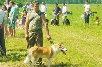 Выставка охотничьих собак вКалуге