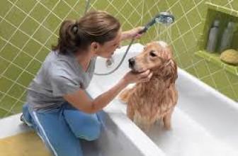 Как правильно мыть щенка
