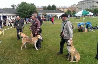 100-я выставка охотничьих собак в Санкт-Петербурге