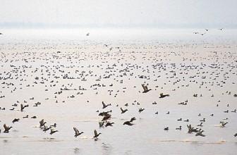 Ресурсы водоплавающей дичи— от научных данных куправлению