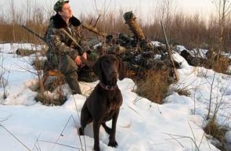 Нетрадиционное использование легавых на охоте